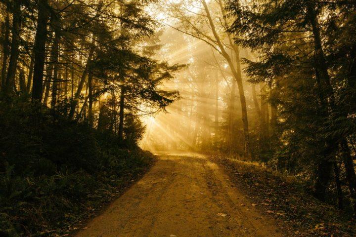 El Camino-Taoísmo-Futuremagazine
